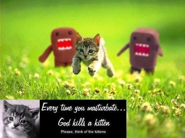 Nu omorati pisicile