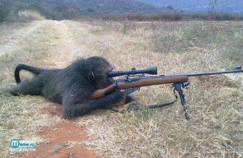 Maimuta soldat :))