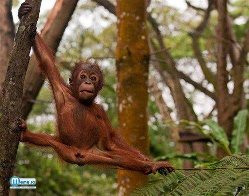Pui de maimuta :))