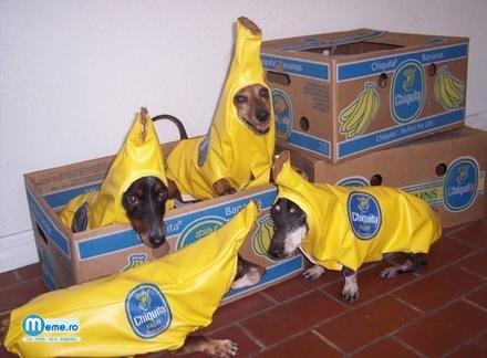 Cateii banana