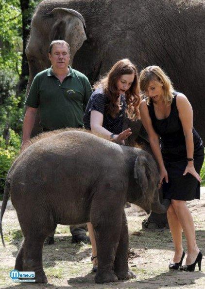 Elefantel pervers