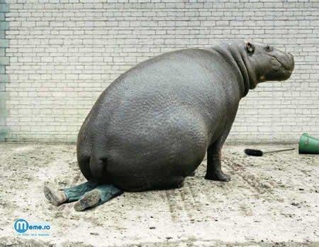 Fund de hipopotam