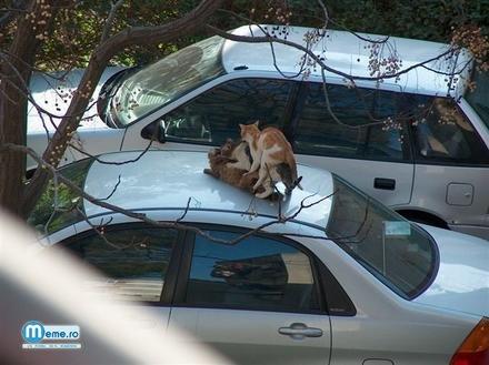 In trei pe plafonul masinii