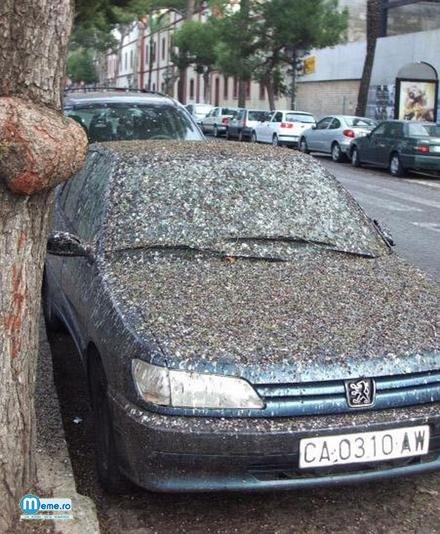 Pasarile il urasc pe propietarul acestei masini