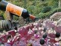 Petrecere in vin