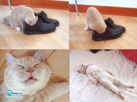 Pisica ucisa de pantofi