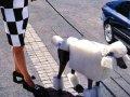 Poodle cubic