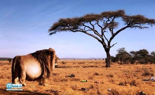 Evolutia leilor