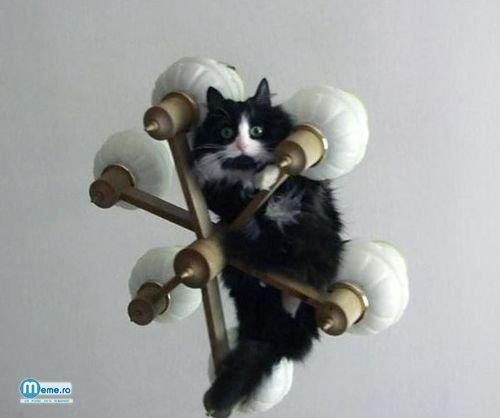 Pisica pe lustra