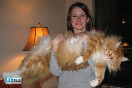 Pisica uriasa