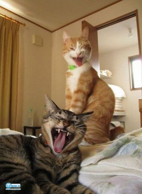 Pisici posedate