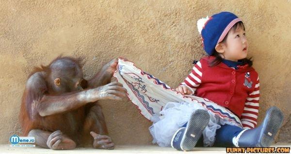 Maimutica curioasa