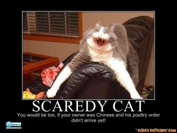 Pisica speriata rau