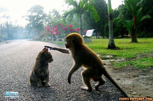 Pisicuta si maimutica