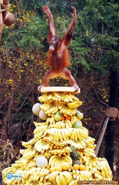 Regele Maimutelor