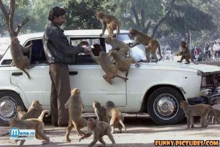Atacul Maimutelor