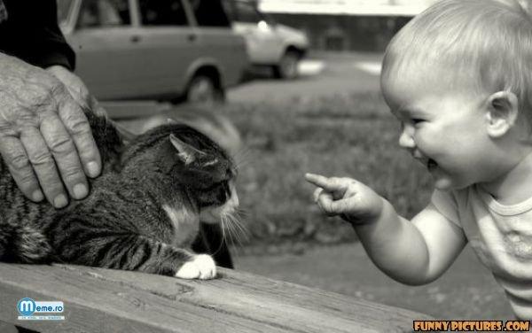 Bebelus si pisicuta