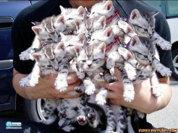 Multeeee pisicute