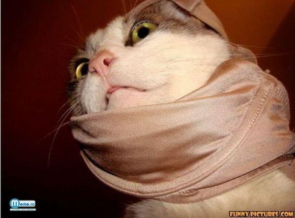 Pisica infasurata