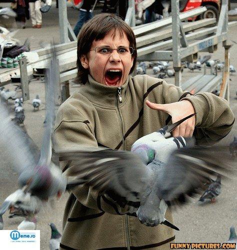 Atacul porumbeilor