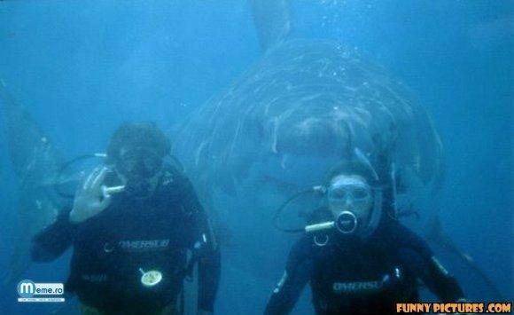 Cu rechinul in spate