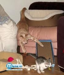 Pisica care ataca