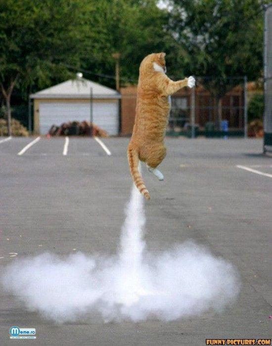Pisica spatiala