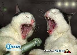 Pisici la karaoke