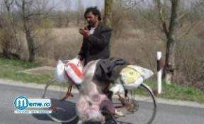 Cu purceaua pe bicicleta