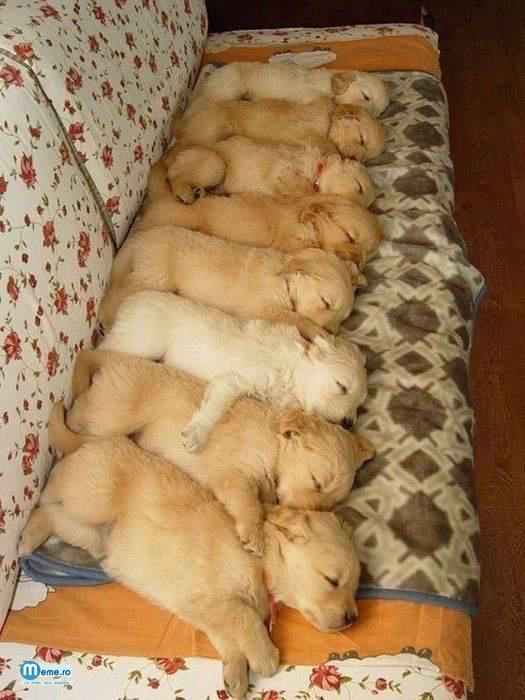 Catelusii la culcare