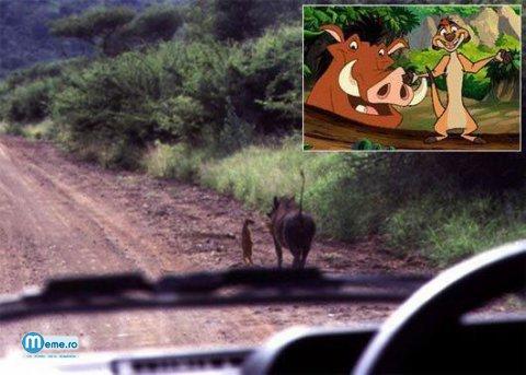 Timon si Pumba in lumea reala..